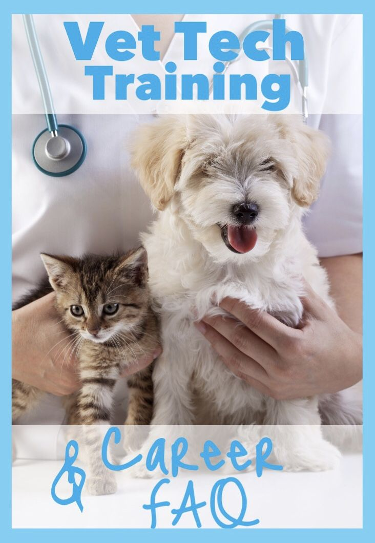 Want To Work In A Veterinary Clinic Look At These Programs Vet Tech Student Veterinary Technician