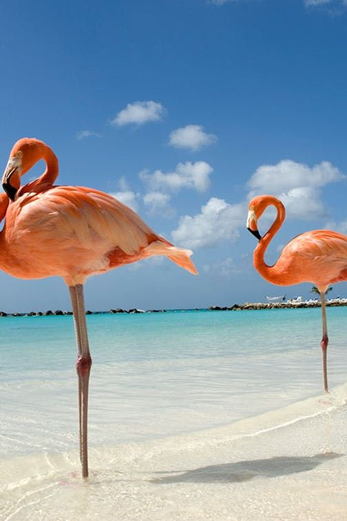 Dream Job Alert: Get Paid to Play with Flamingos in the Bahamas #purewow #hotel #travel #vacation inspiration #news #vacation