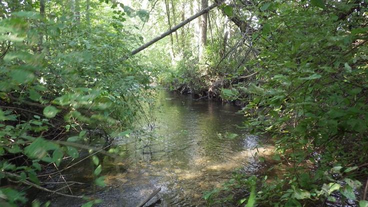 Coldstream creek ,Vernon bc Canada  Taken by Tanya L Gordon