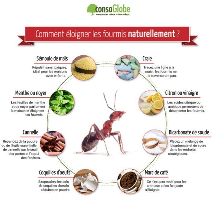 Débarrassez-vous des fourmis autour et dans la maison en une seule nuit! - Trucs et Bricolages