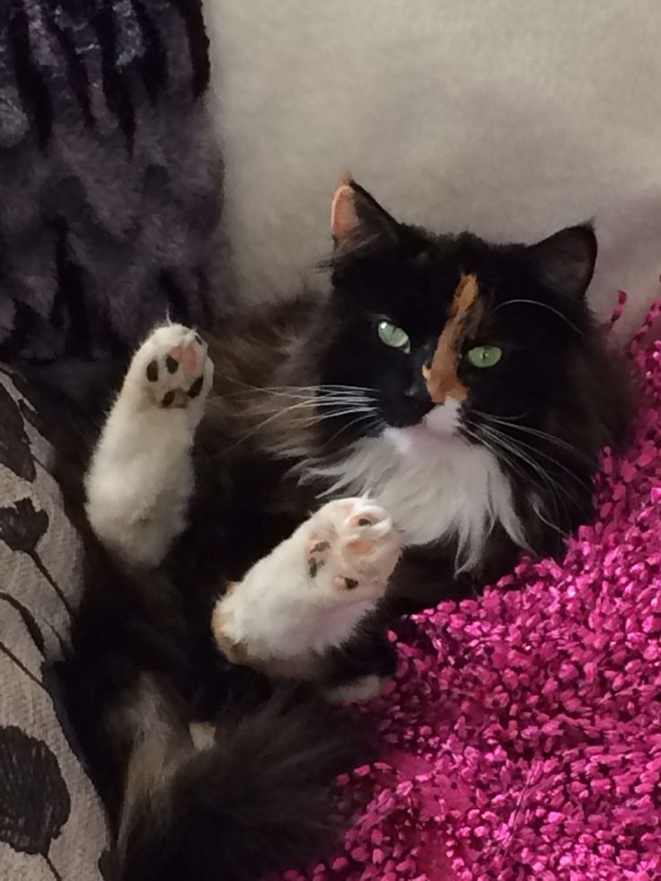 Lol... Queen Mollie - the definition of relaxation !!