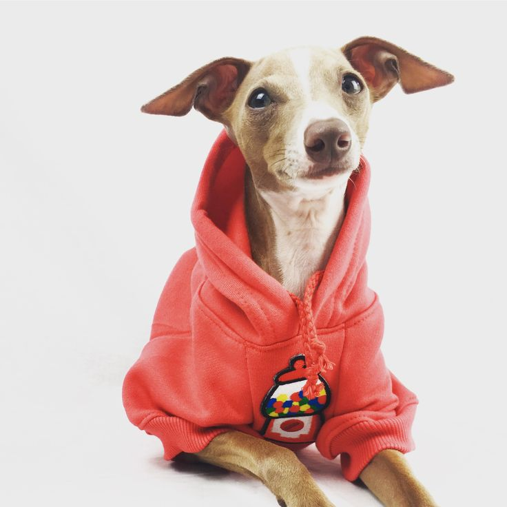 Dog hoodie by Mutt and Stray