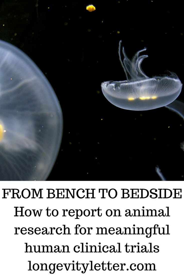 From bench to bedside  - how to report on animal research for meaningful human clinical trials
