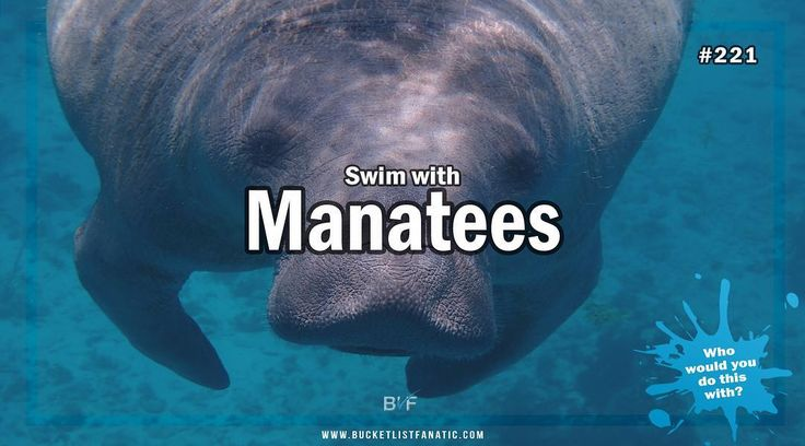 Is swimming with manatees on your bucket list? #bucketlist #bucketlistideas #blf #manatees