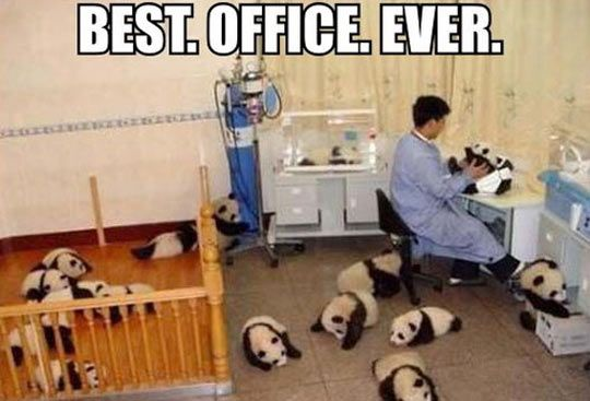 My favorite is the little guy on the right, getting into shenanigans when the guy's attention is on another panda.