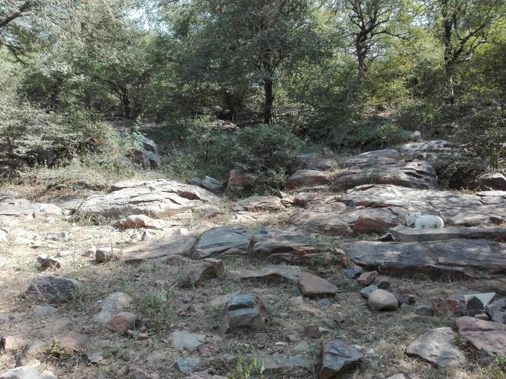 Lower point of Govardhan Hill which Lord Krishna lifted to save Vrindavan from a heavy storm caused by the King of Gods, Indra