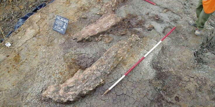 Prehistoric Butchery Site Yields Big Surprise About Early Humans