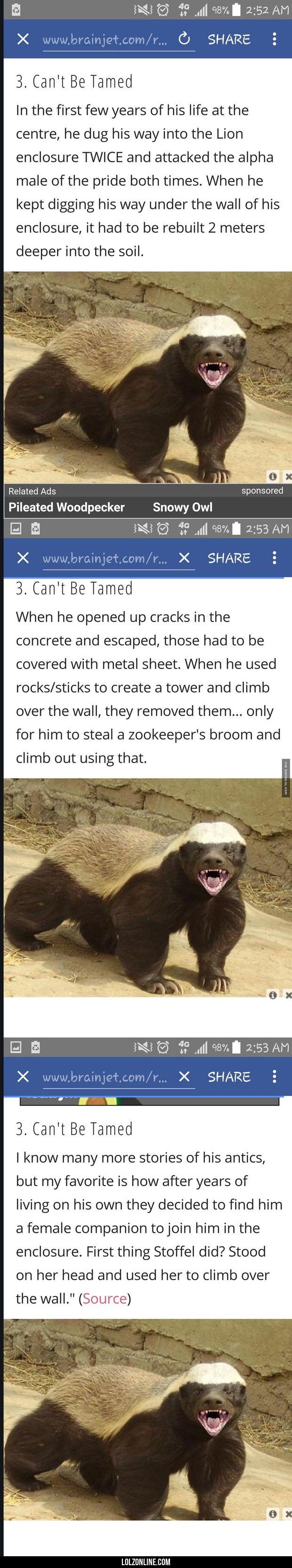 That Poor Lion#funny #lol #lolzonline