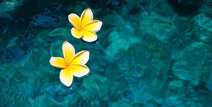 Frangipani flowers floating in a private villa pool in Seminyak