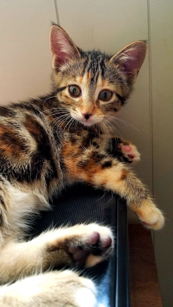Pets For Adoption Near Edmonton Ab Petfinder Saving Cat Pet Adoption Cute Cats