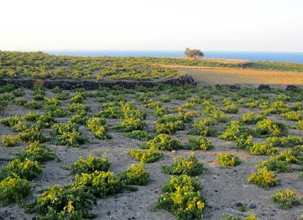 Gaia Winery is situated on a beach, on the east side of the island, between Kamari and Monolithos settlements.