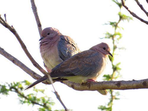 174 Garden at Kuifkopvisvanger guest house #Birds