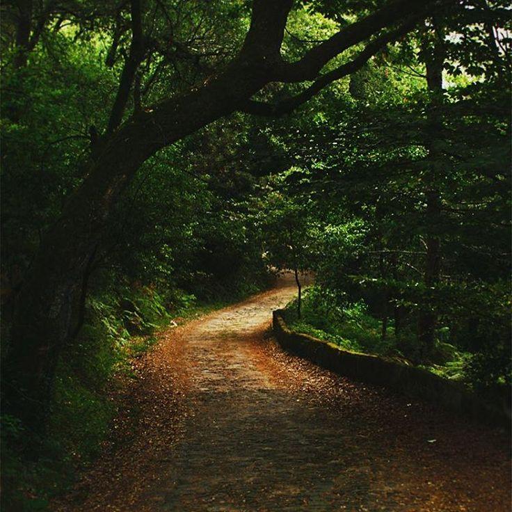 By Unleash Design #unleashdesign #nature #naturebeauty #greenbeauty #path #nature #photography #walkinthewoods #treehugger #walks #beautiful