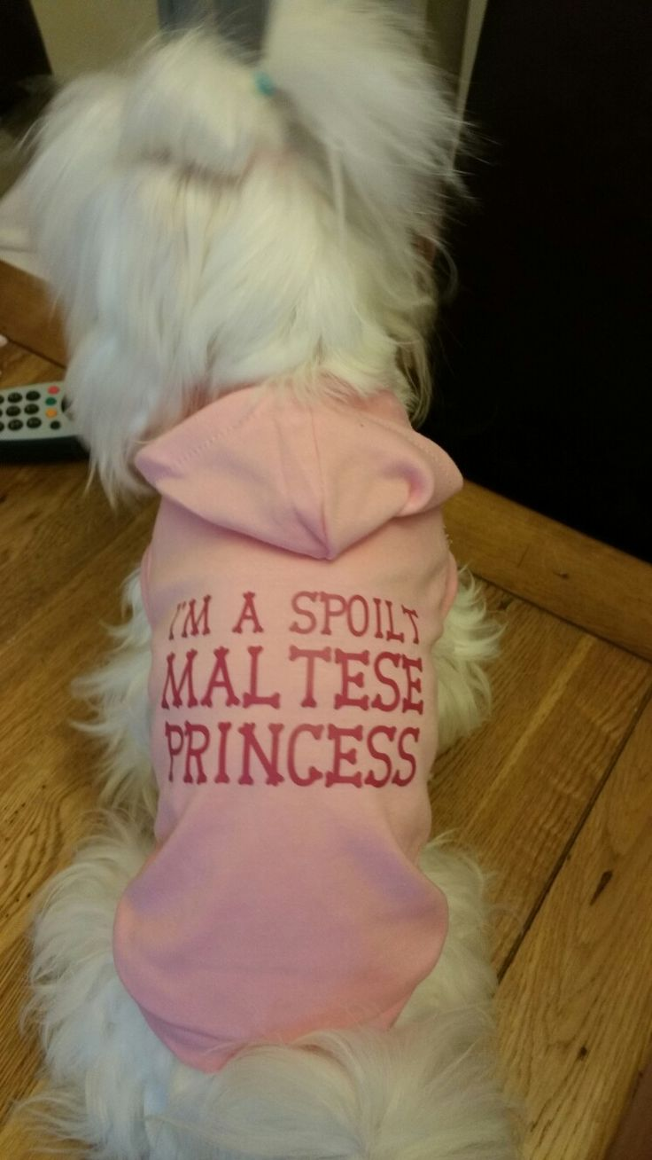This t shirt is for sale at Pixie's Posh Pets Boutique fb or send email to pixiesposhpets@yahoo.co.uk  website www.pixiesposhpets.co.uk