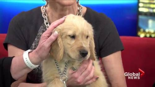 Watch Adopt a pet: Cody and Artie Video Online, on GlobalNews.ca