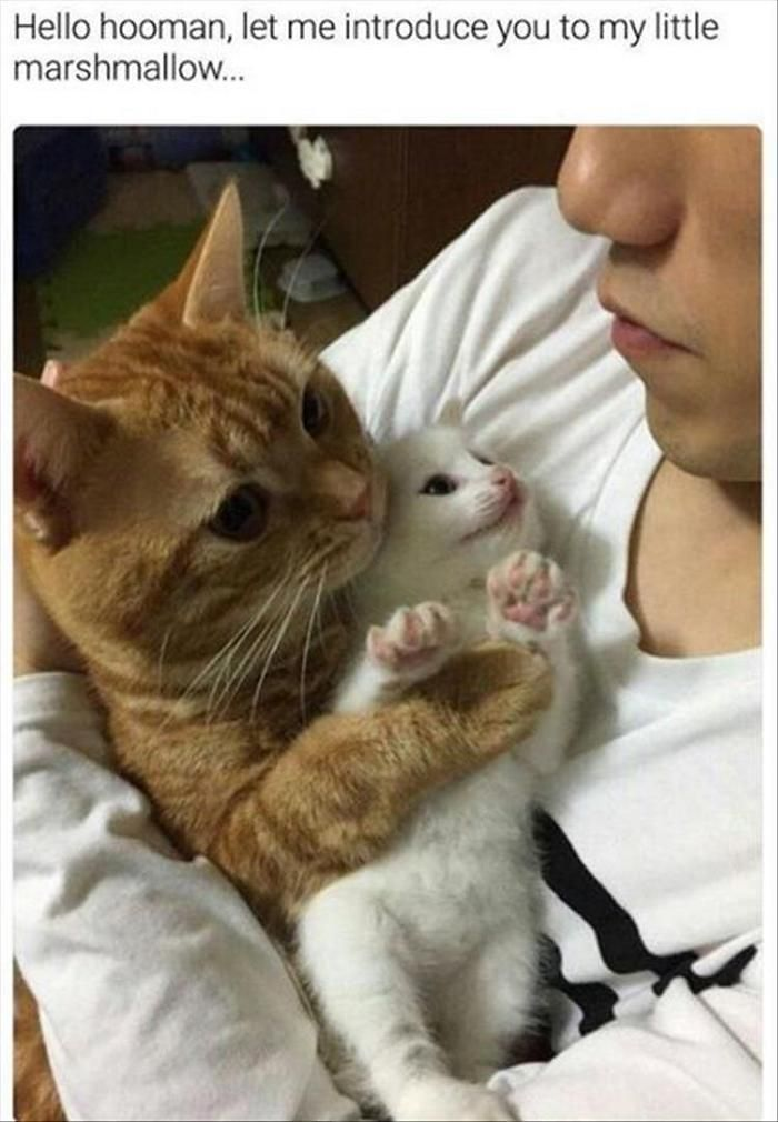 Funny Animal Pictures Of The Day Volume 4 26 Pics Cats And Kittens Cute Animals Kittens