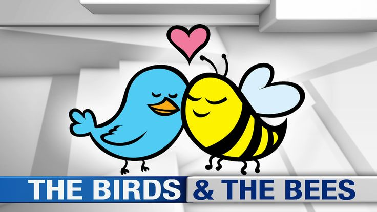 Parents Sometimes Struggle With 'Birds And Bees' Talk. Our expert, Dr. Elise Berlan of Nationwide Children's Hospital, offers advice for parents. #Teens #TheTalk #Health