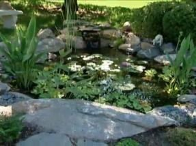 While bringing fishes in life, it becomes important to keep them healthy and in clean environment. Hire the services of Fishy Business for the pond maintenance at very reasonable price.