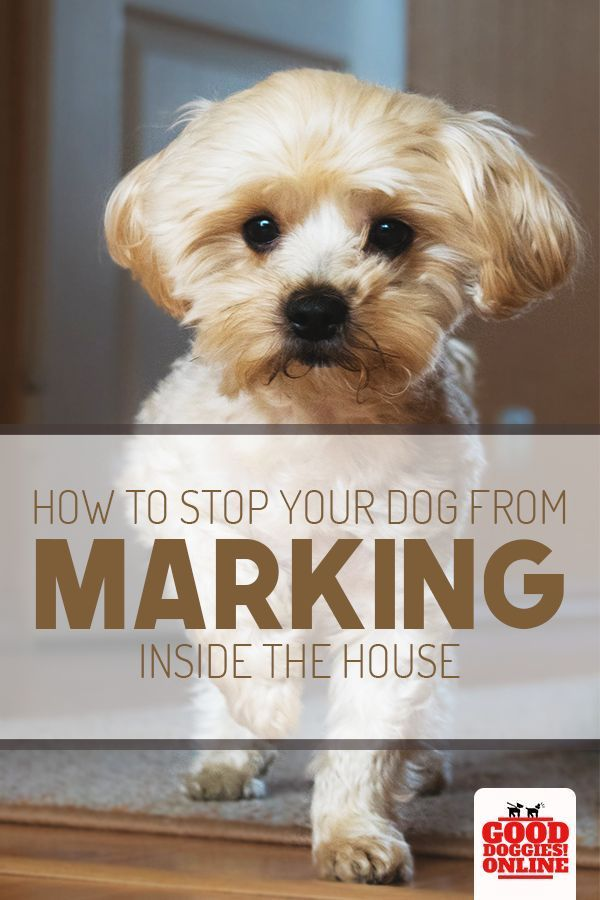How To Stop Your Dog From Marking In The House Dog Training