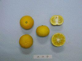 ユコウ(柚柑/柚香)は、ミカン科ミカン属の常緑小高木(ゆずの変種)、およびその果実