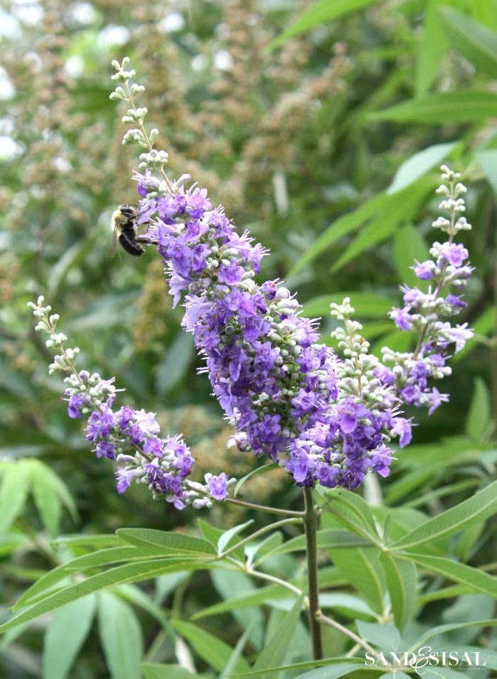 20 Plants That Attract Erflies Green Thumb Pinterest And Flowers