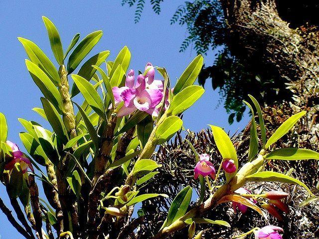 Orchideen meiner Straße / Orchideen meiner Straße von parchen, via Flickr – #F… – Parchen F…