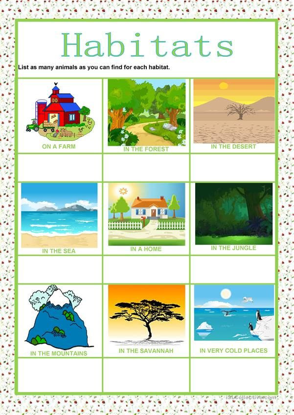 Animals Habitats Animal Habitats Habitats Kindergarten Posters