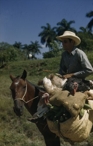 1940's A farmer rides to market with turkeys and fruit. Las Villas, Cuba.MELVILLE B. GROSVENOR/National Geographic Creative