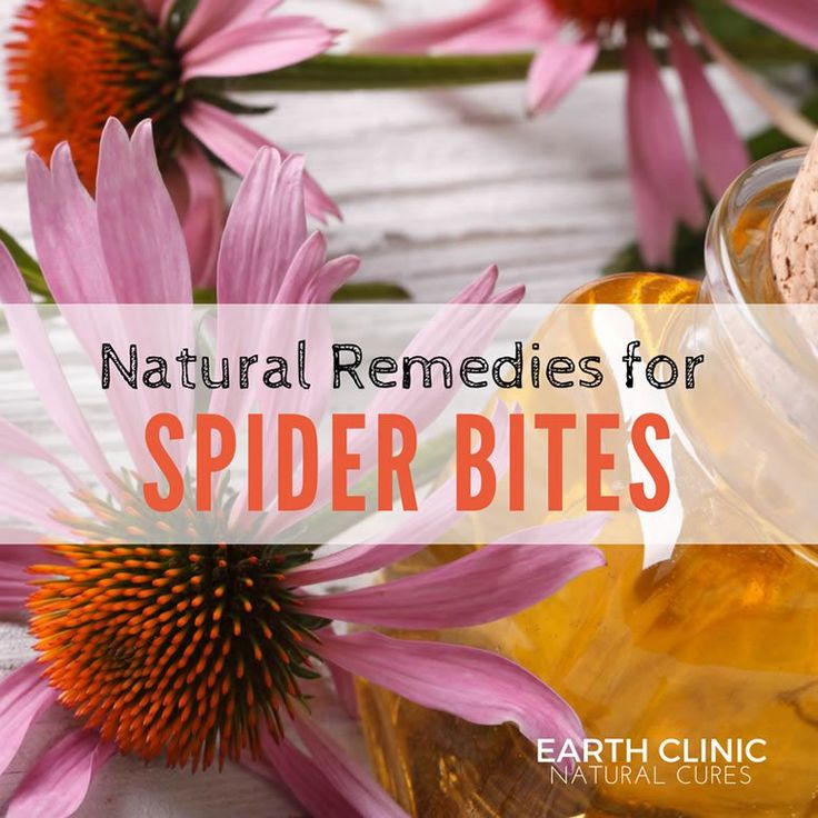 Natural remedies for spider bites include topical remedies to relieve the pain and itching and internal remedies to support the immune system. Learn more: https://www.earthclinic.com/cures/spider_bite.html