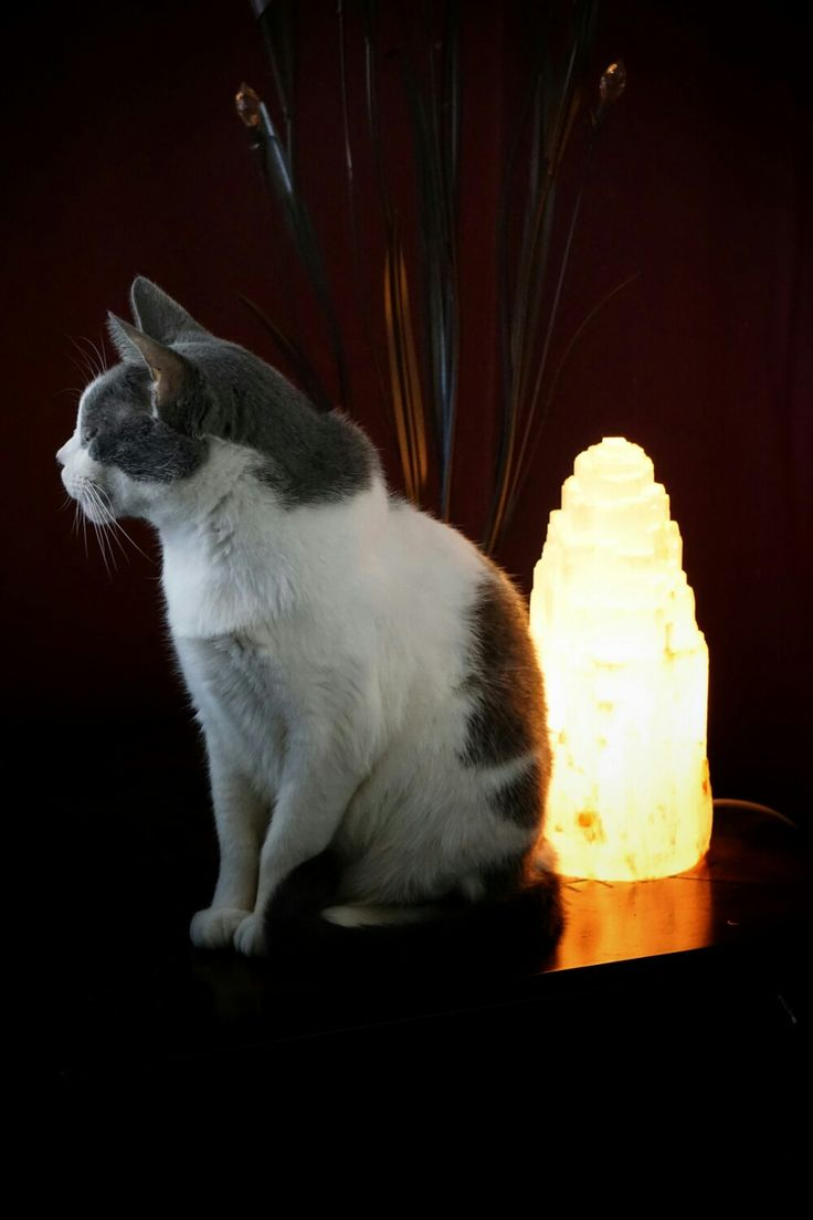 Salt Lamps And Cats Awesome 34 Best Rock Crystal And Salt Lamps Images On Pinterest  Light Decorating Design