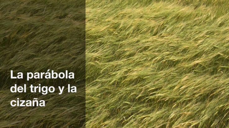 La parábola del trigo  y la cizaña