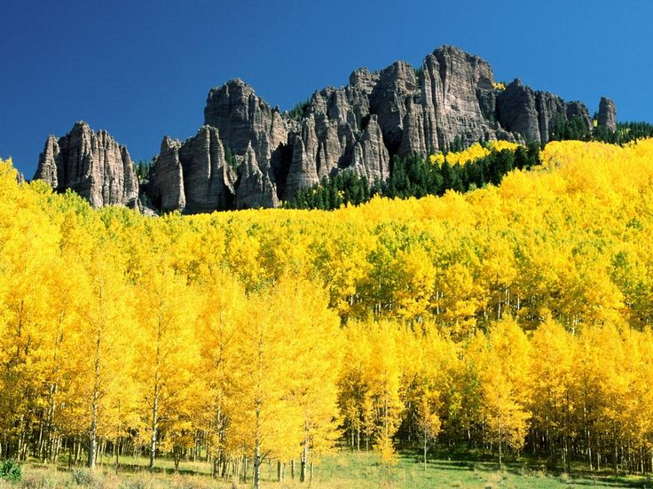ColoradoColors Colorado, Aspen Trees, Favorite Places, Nature, Autumn, Beautiful Colorado, Uncompahgre Peaks, Travel, Aspen Colorado