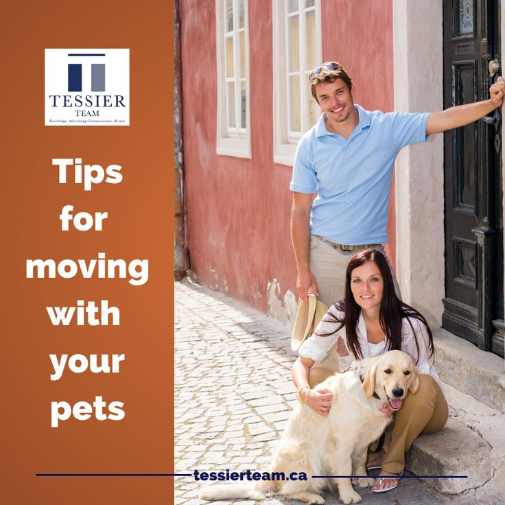 #Tips for #moving with your #pets #tessierteam