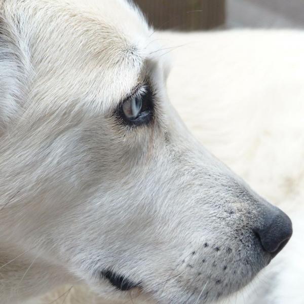 Ansiedade de separação em cachorros