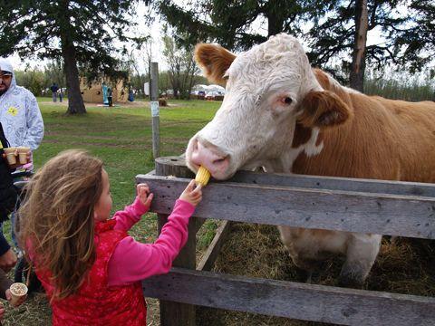 Snyders Family Farm: Fall Fun & Pumpkins
