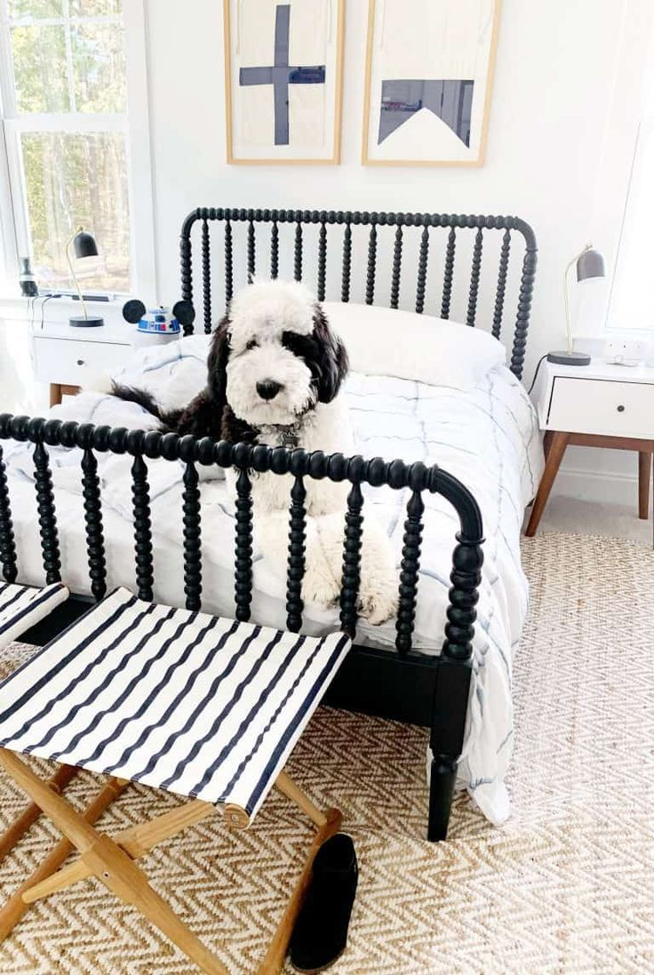 Our Giant Sheepadoodle The Good Bad Amp The Smelly In 2020 Sheepadoodle Dog Bedroom