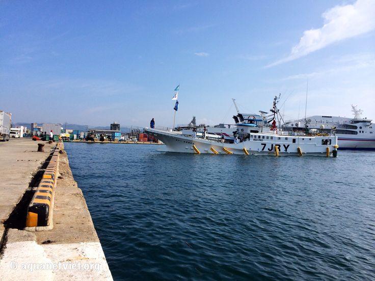 Miễn thuế môn bài với cá nhân nuôi trồng, đánh bắt thủy, hải sản   Vietnam Aquaculture Network - Mạng Thủy sản Việt Nam