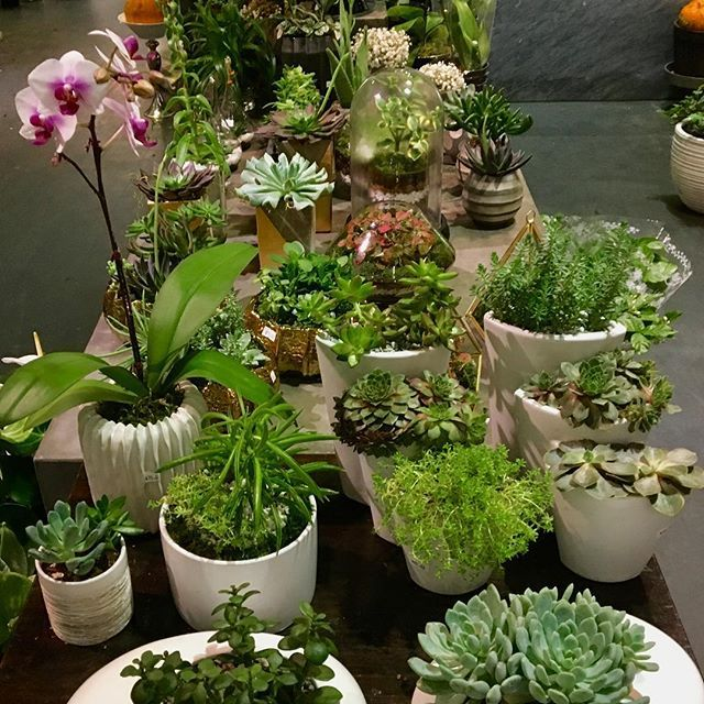Things I made! At @gifvancouver  #gardening #houseplants #indoorplants #botanicalart #greenthumb #succulent #display #terrarium #orchid #moss #southgranville #vancouver #ilovemyjob