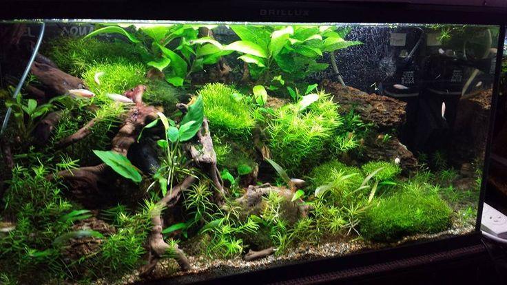 ... about Turtle on Pinterest A turtle, Aga and Live aquarium plants
