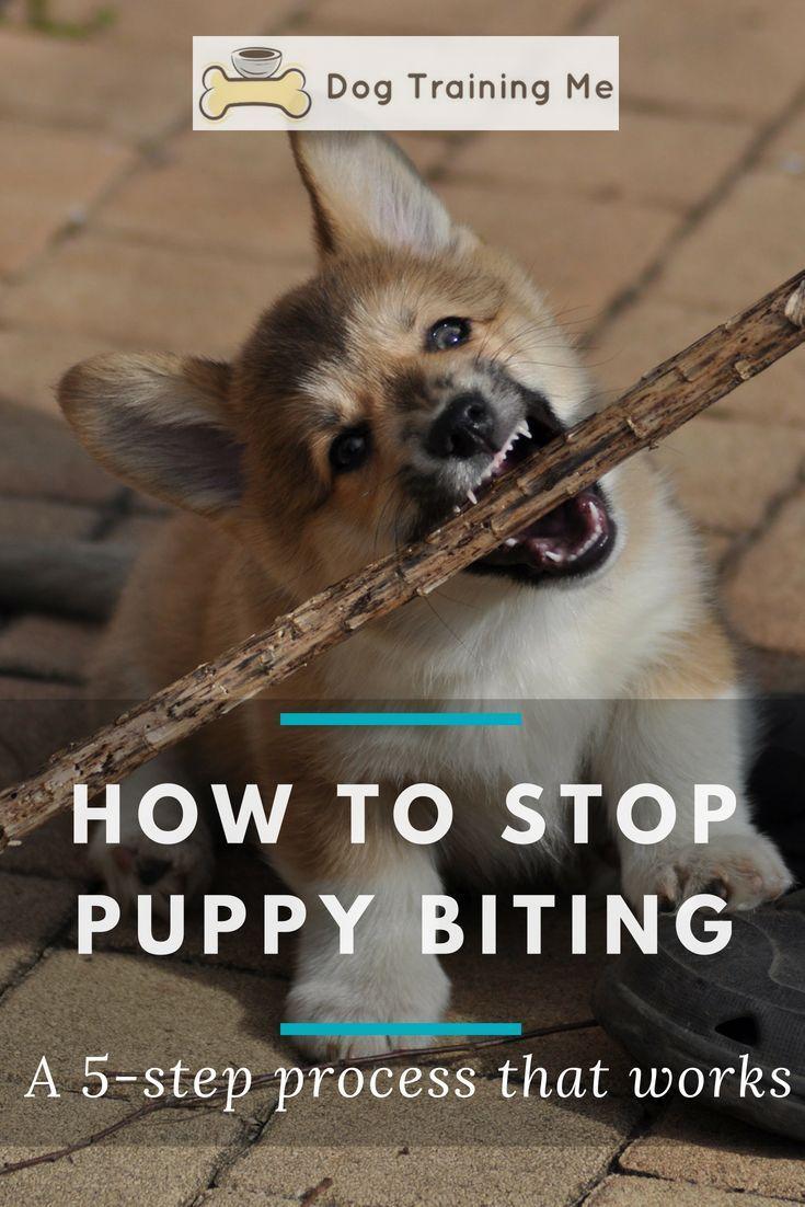 6c9ee46e229cf74daca8a534e733abed - How To Get A Dog To Stop Aggressive Biting