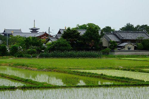 薬師寺西塔遠望 Yakushiji Temple