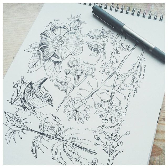 Very quick daily sketch today. Wildflower mix and a little Wren popped in. #dailysketch, #linework, #drawing, #creativepractice, #sketchwork, #sketchbook, #doodles, #nature, #wildflowers, #uniball.