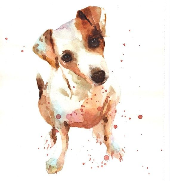 Watercolour of Dotty the Jack Russell by Alison Fennell. Prints can be bought from her etsy shop.