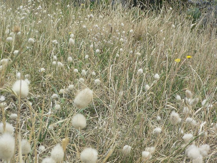 102 best ideas about plants i have in the garden on for Tall grass looking plant