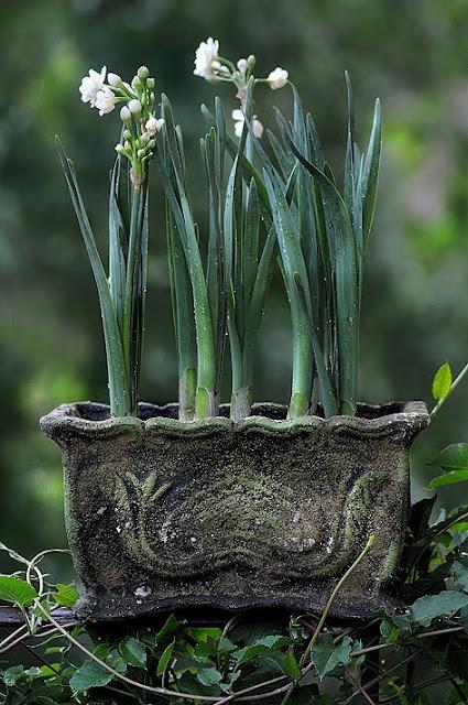 Beautiful jardiniere - concrete inspiration