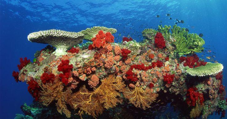 Como fazer um bioma de recife de coral em uma caixa de sapatos. Para a sua próxima apresentação escolar, leve um recife de coral exótico para impressionar seus colegas. Bom, talvez não seja possível transportar exatamente um recife real para a escola, mas você pode fazer uma réplica compacta impressionante e semelhante ao real. Tudo que você precisa para começar a fazer o projeto é uma caixa de sapatos vazia. ...