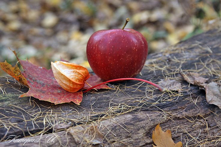 October. a walk in the Park. want an Apple? :)
