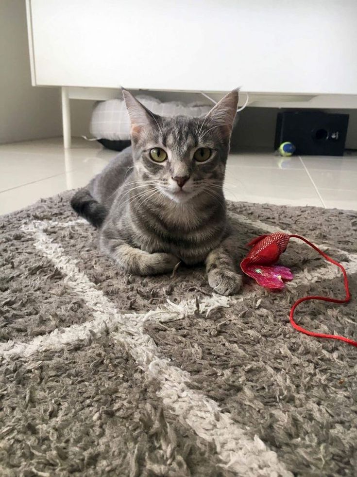 Little adrienne found her forever home - http://cutecatshq.com/cats/little-adrienne-found-her-forever-home/