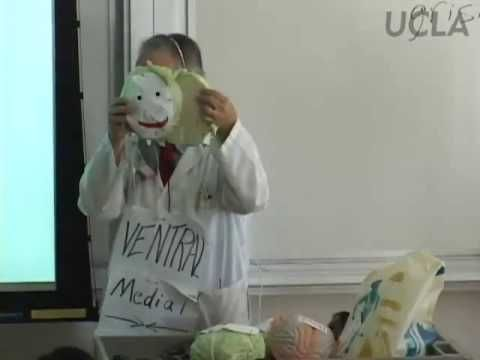 Behavioral Neuroscience Lab, Lec 1, Psychology 116, UCLA (Lecture 1 of 8 Lectures)