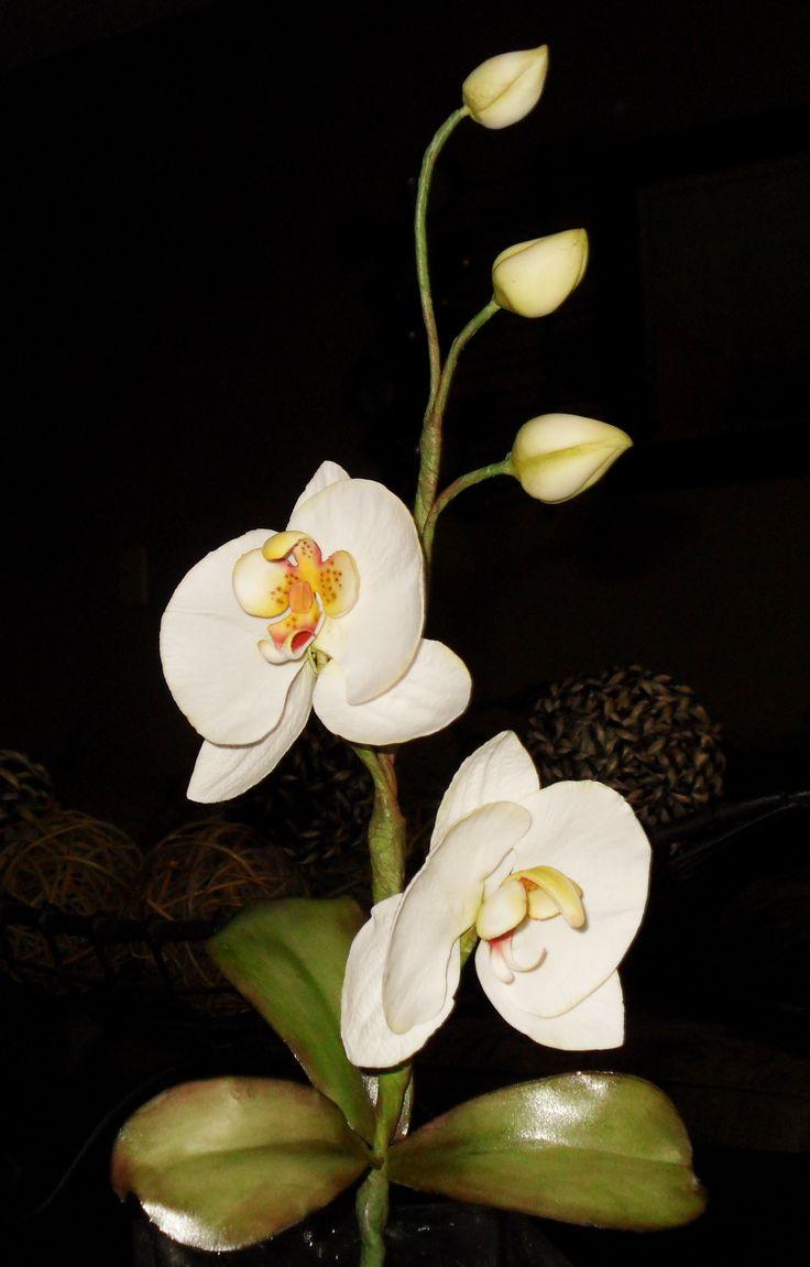 93 besten orchideen bilder auf pinterest orchideenbl ten. Black Bedroom Furniture Sets. Home Design Ideas